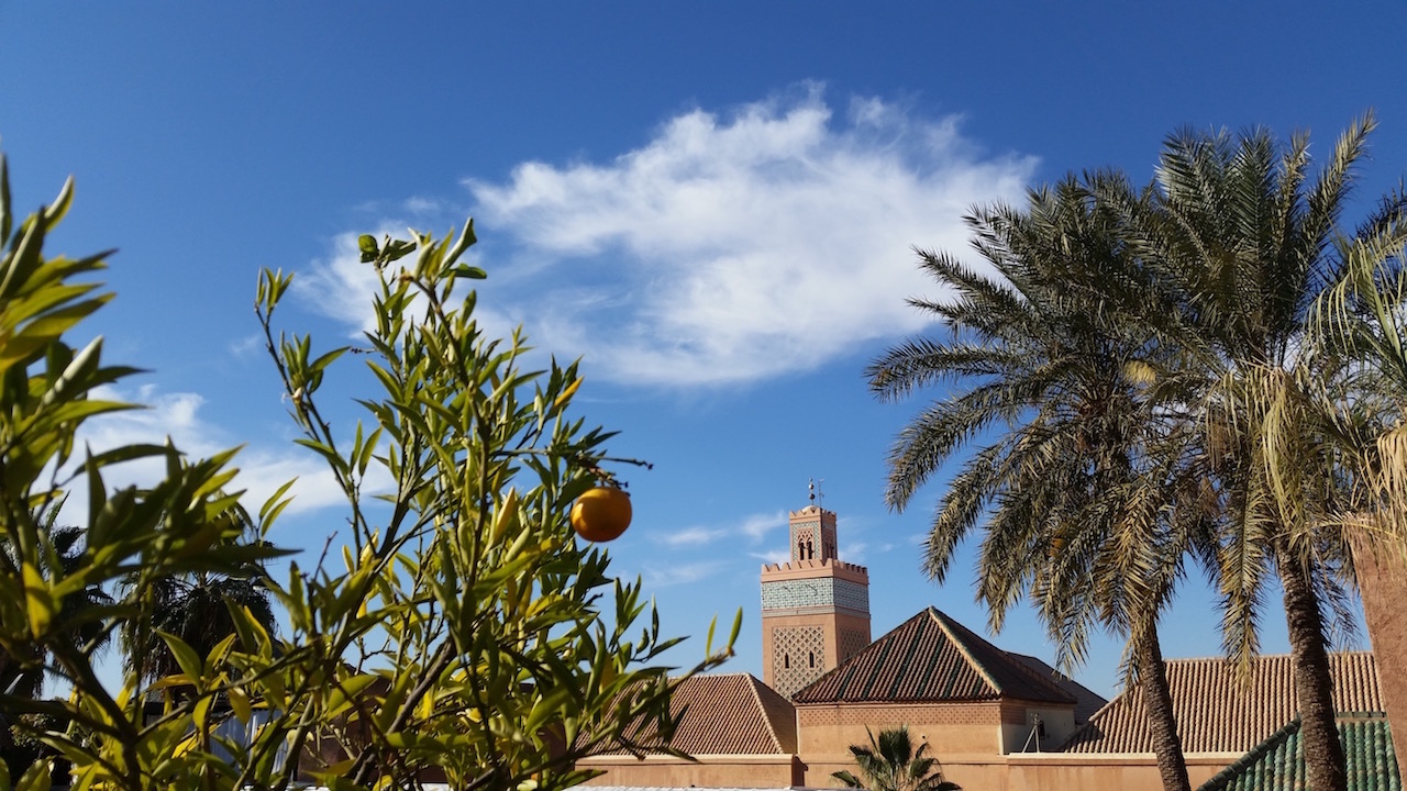 Orange trees and blues skies in Marrakech Copyright Mandy Sinclair